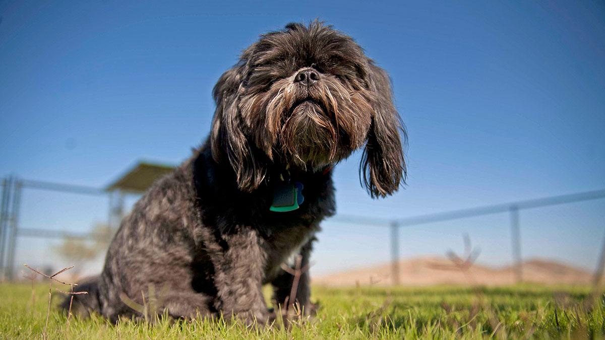 Robson Retirement Community, Robson Ranch Arizona Dog Park